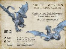 Arctic Wyvern Hatchling