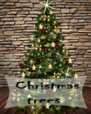 Christmas trees 23