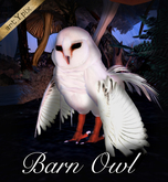 Barn Owl / Buho lechuza / Hibou chouette