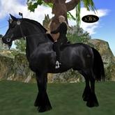 AKK XL09 Draft  Black Clyde Horse
