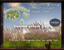 FN*Japanese pampas grass-mesh