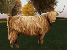 3D Hologram Shaggy Scottish Highland Cow - 1 Prim