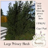 Large Privacy Shrub