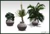 Office Interior Plants Set - Home and Garden Interior Plants