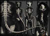 Skeletal Cat - Chinchilla Furry Mod BOM