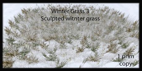 winter grass 3