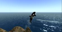 OFF sim jumping orca