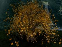 Willow for Autumn, Copy&Modify