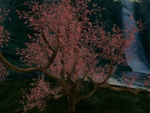 Autumn Tree, Copy&Modify