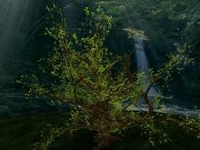 Summer / Spring Big Tree, Copy&Modify