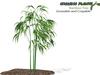 Growing Plants – Mesh Growable and Harvestable Bamboo Tree Sapling