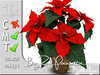 Terrashop - Big Red Poinsettia with gold edges 100% original mesh