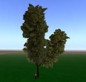green flexy tree