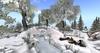 Winter nature wonderland 008