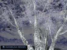 Winter 3 Trees lightly white, Copy&Modify, 6 prims