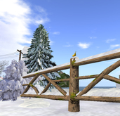Winter: Snowy wooden fences with winter shrub