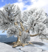 "Snowy winter oak ""Big Mama"" with bird sound"