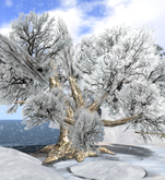 "Winter Oak ""Big Mama"" w. bird sound, 10 prims (mod/tr)"