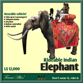 Elephant India for riding by Timmi Allen