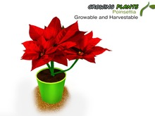 Growing Plants – Mesh Growable and Harvestable Poinsettia Plant