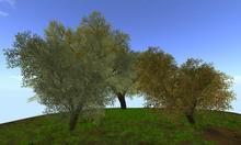 Sweet Memory Tree A Natural (copy)