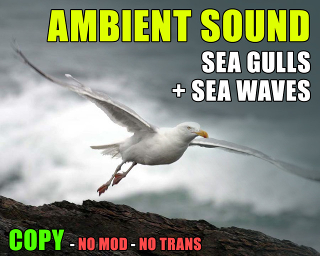 Seagulls and beach waves ambient sound