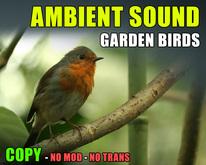 Garden birds environment ambient sound