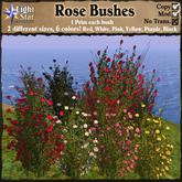 *LightStar- Rose Bushes
