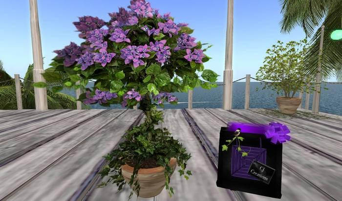 CJ Potted lilac blossom Tree