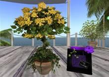 CJ Potted yellow blossom Tree