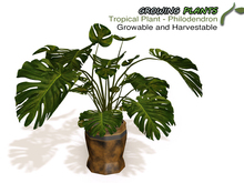 Growing Plants – Mesh Growable and Harvestable Philodendron Tropical Plant