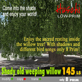 Old XL weeping willow with shadow and bird sounds