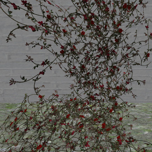 winter rose vine red