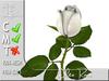 White Rose MC