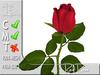 Red Rose MC 100% original mesh
