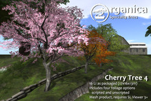 [ Organica ] Cherry Tree 4