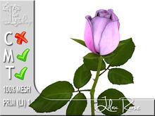 Lilac Rose MT