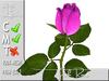Pink Rose MC 100% original mesh