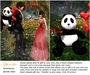 Georgeous huge Panda bear with roses and balloons (boxed)