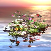 water flowers on grass and stones C/M