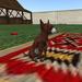 MALE Brindle coat Chihuahua