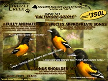 Grizzly Creek Baltimore Oriole Package
