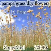 pampa grass dry flowers