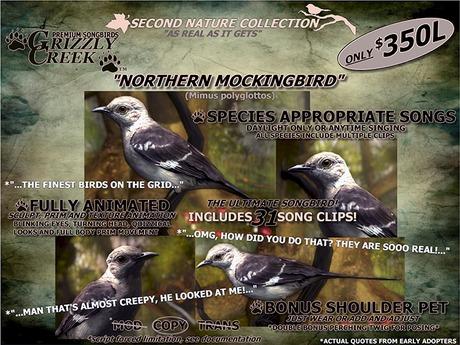 Grizzly Creek Songbird Northern Mockingbird -Rez or Wear-