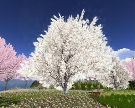 Second Life Marketplace Blossoming Yoshino Cherry Tree 2 With