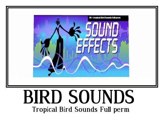 Tropical Bird  Sounds Full perm