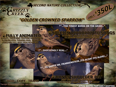 Grizzly Creek Songbird Golden Crowned Sparrow -Rez or Wear-
