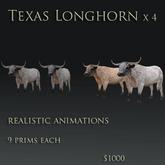 Texas Longhorn cows