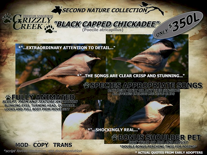 Grizzly Creek Songbird Black Capped Chickadee -Rez or Wear-