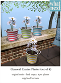 {what next) Cornwall Daisies Planters